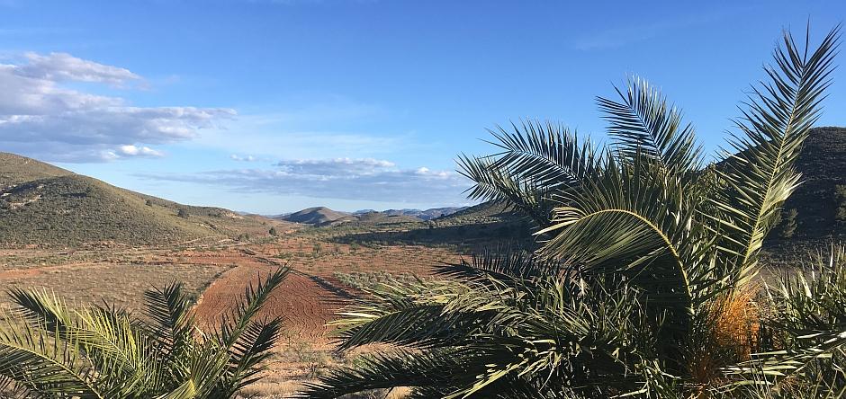 Zwischen unseren Palmen sieht man in Richtung Gebirge
