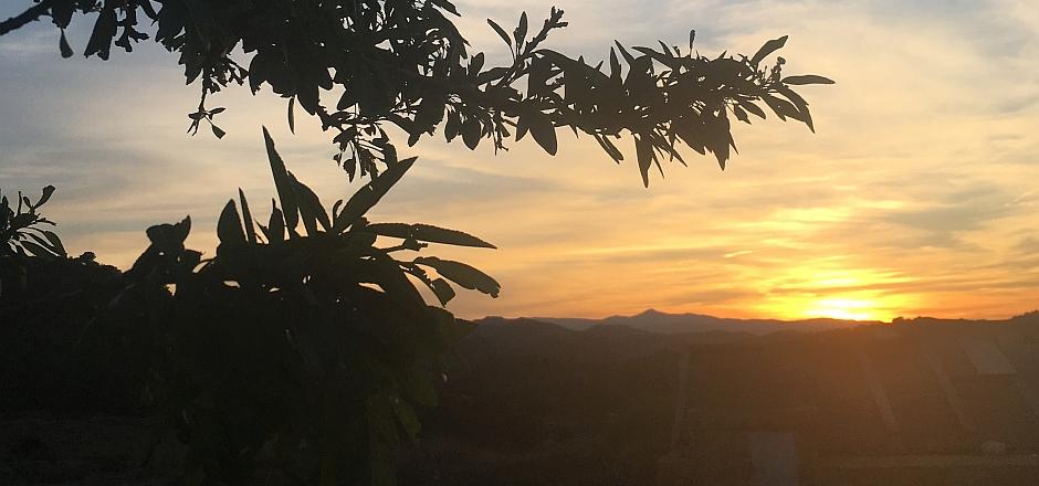 Herrliche Abendstimmung mit Blick Richtung Gebirge
